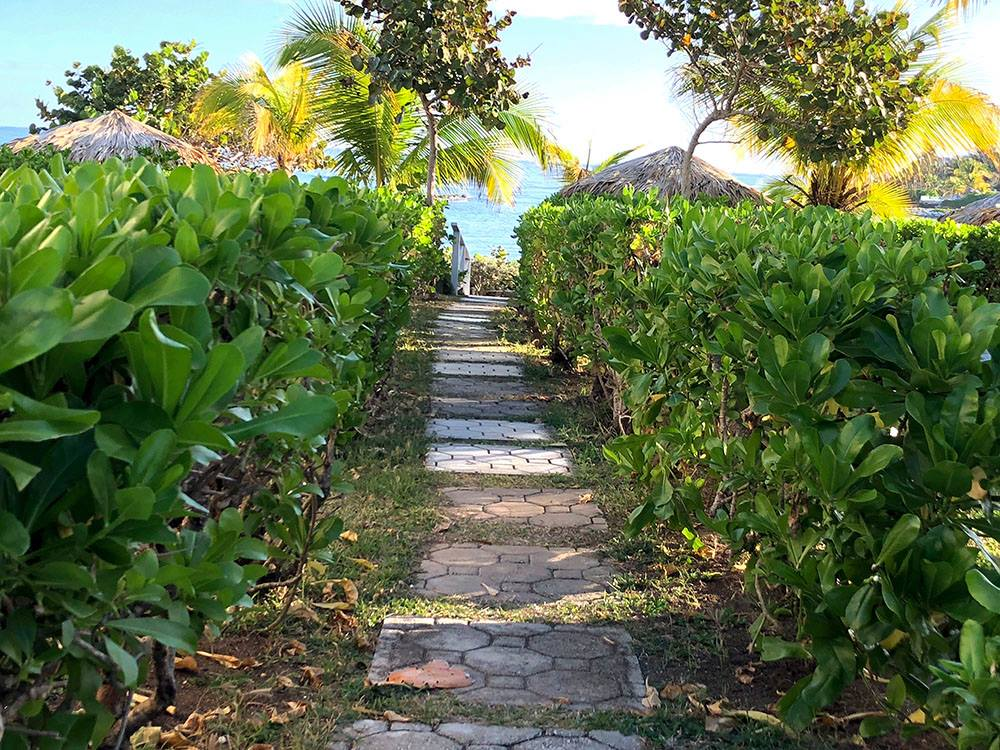 Path in Jamaica