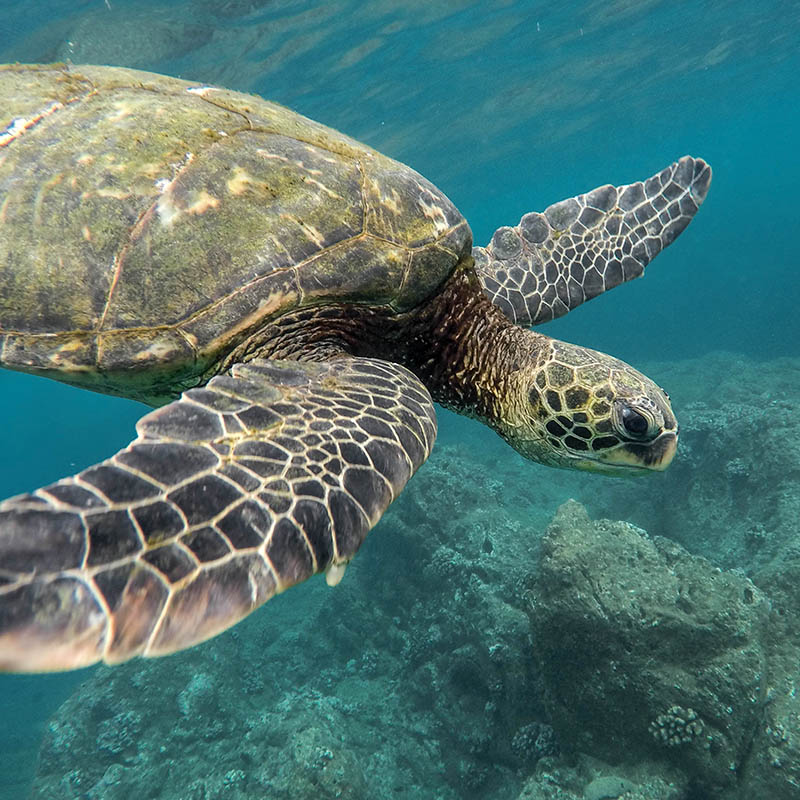 Roatan and Turks and Caicos world's best barrier reefs.